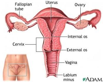 Rakovina krčka maternice