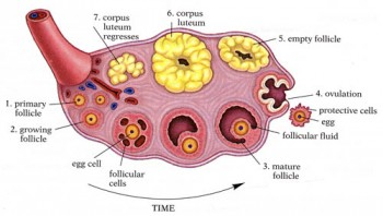 Rakovina vaječníkov